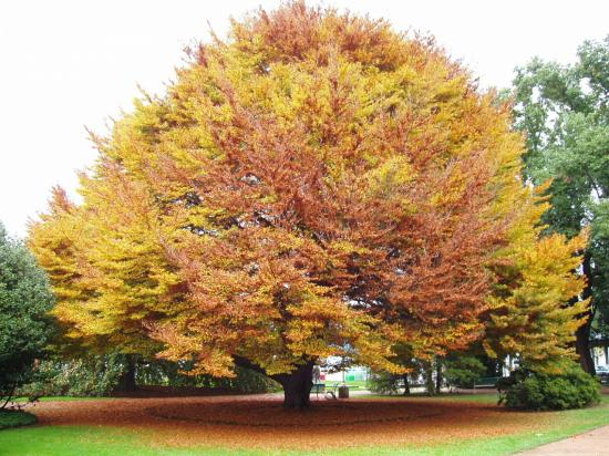 Strésa couleurs d'automne