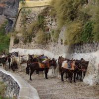 Santorin le chemin des ânes