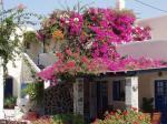 Santorin Maison fleurie