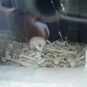 Douaumont  l'ossuaire